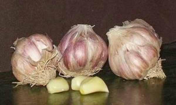 If-You-Have-One-Of-These-6-Conditions-You-Should-Stop-Consuming-Garlic-Immediately