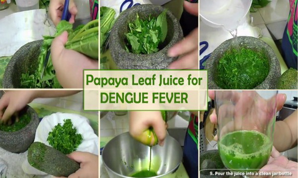Papaya-Leaf-Juice-Treats-Dengue