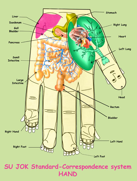 fingers-can-reveal-your-health-prevent-certain-diseases-just-in-time-with-su-jok-therapy1