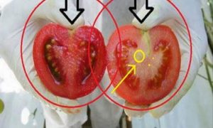 We Are Eating A Poison! Here's How To Identify GMO Tomatoes In 2 Easy Steps
