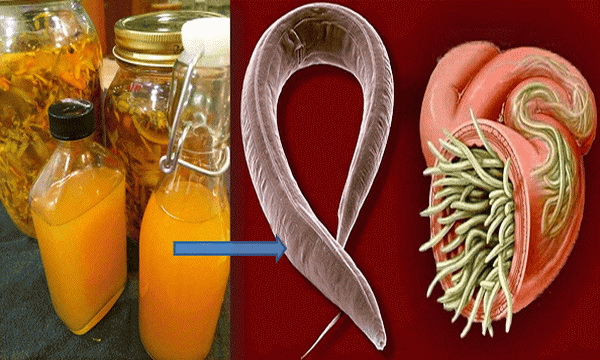 Kill Any Infections Of Your Body With This Powerful